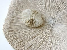 Ceramic and nature Lidia Boševski - almost reminds me of the mushrooms I'm making for the pod project. I love how delicate these look and how the lines are so small and close together.