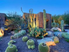 Large Cacti Garden Bed With LED Lighting in Front of Modern Home