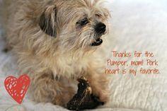 Jones Natural Chews Pumper - a Pork Heart Dog Valentine