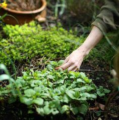 #urban #moestuin #garden