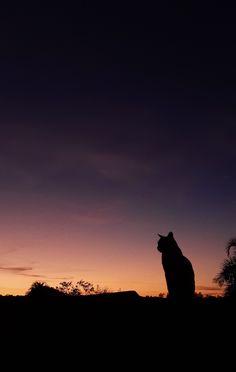 Cute Cats, Funny Cats, Black Cat Aesthetic, Serious Cat, Shadow Painting, Morning Cat, Fantasy Beasts, Pretty Sky, Arte Horror