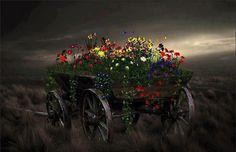 Carul cu flori