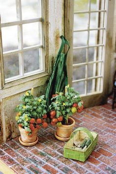 close-up of miniature tomato plants