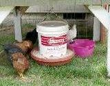 Homemade Chicken Feeder & Waterer Designs & Pictures