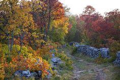 Carso in autunno. photo: Paolo Toffoli (da flikr)