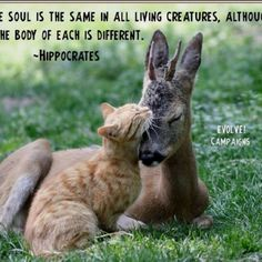 """"""" The Soul is the same in all living creatures, although the body of each is different."""""""