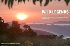 A feature on #Uganda's wildlife  by Andrea Wren (photo by Dale Morris) - published in WildJunket Magazine Apr/May2012