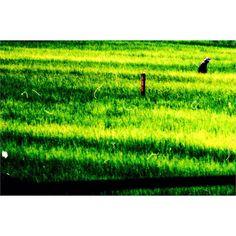 I only like mornings when I'm traveling; The early cold The bag under my eyes Coffee and cigarettes while still a sleep. Nothing in my mind  just road and speed. The road Thailand. - Solo me gustan las mañanas cuando estoy de viaje. El frío temprano Las ojeras Café y cigarros aún estando dormido. Nada en la cabeza  solo carretera y velocidad. La carretera Tailandia. - #Sudacaframes #ElojoabiertodeGuaicaipuro #35mm #film #thoughts #people #ontheroad  #Instagram #Losangeles #fuckoff #nyc…