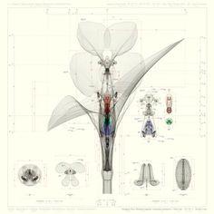 Macoto Murayama #artist #inorganicflora