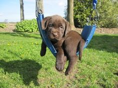 just a puppy on a swing