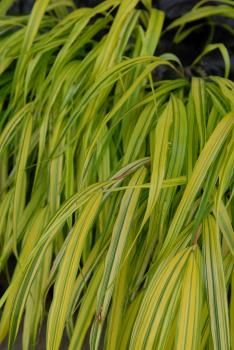 Ted Lare Garden Center   Grasses | Yard | Pinterest | Gardens, Center! And  Htm