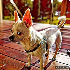 Chiwawa, Cute Chihuahua, All Things Cute, Dog Boarding, Love Pet, Puppy Pictures, Animal Tattoos, Animal Memes, Best Dogs