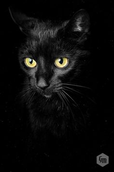 Meaow by Goncalo Martins on 500px