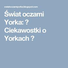 Świat oczami Yorka: ♥ Ciekawostki o Yorkach ♥