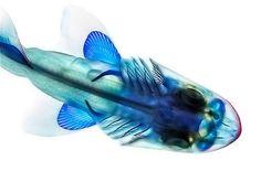 Анатомия рыб в уникальном проекте Adam Summers. (9 фото)