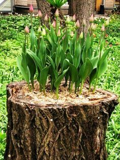 How to reuse a fallen tree. The idea is great
