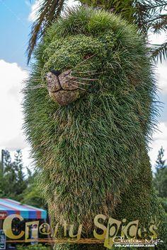The Lion topiary at Busch Gardens Topiary Garden, Topiary Trees, Garden Art, Garden Design, Herb Garden, Aquarium Garden, Garden Bed Layout, Cross Stitch Quotes, Gothic Garden