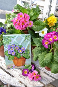 My Painted Garden: Winter Primroses - Here - There - Everywhere
