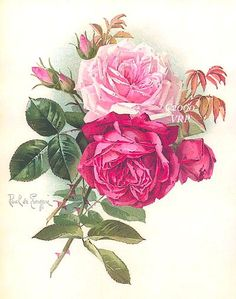 Print FREE SHIP Victorian Meadow Roses Paul by VictorianRosePrints, $12.99