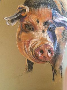 Oxford Sandy and Black pig in pastel