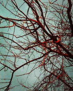 Bütün yaprakların seni terk etmiş olsa bile sen her halükarda güzelsin #biragacisevmek #tree