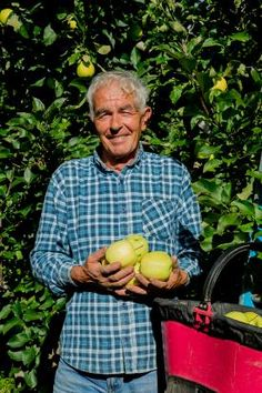 raccolta delle mele melinda