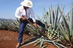 tequila jalisco - Buscar con Google