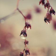 Raindrops on cactus flowers