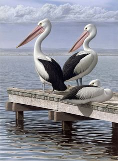 Three PelicansMixed Water-based Media on Rag Paper, Image Size 1106x810mm.