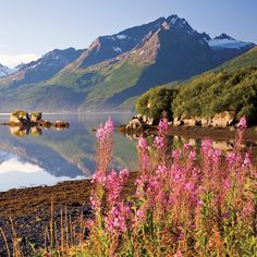 Towering mountains, glaciers, wildflowers and wildlife are all an exciting part of the Alaska Driving experience.
