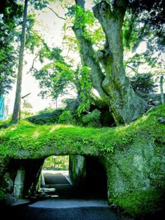 This tree tunnel looks unbelievable!  Do you know where it is located? The place is quite #popular with tourists due to the existence of a famous Japanese #temple here.