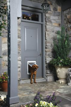 The PASSport flap door can be programmed so that up to 20 animals can have unique time restrictions for going in and out of the house.
