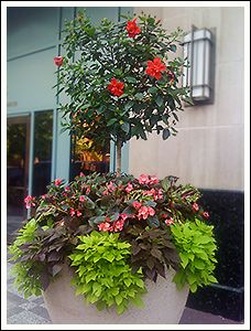 Summer outdoor planters and container gardens; No plant identifiers, but pretty container images....