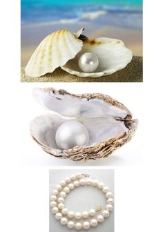 Behind the Mystery of the Pearl Nights In White Satin, Pearl Love, L5r, Types Of Gemstones, Homemade Christmas Gifts, Oysters, Jewelry Making, Tableware, Pearl Oyster