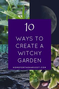 composite image showing nettles, moon, plant roots, and witch herbs with text overlay - 10 Ways to Create a Witch Garden