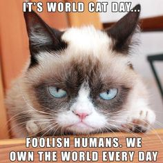 Cats rule the world. Grumpy Cat Quotes, Grumpy Cats, Kitty Cats, Grumpy Cat Humor, Cat Jokes, Angry Cat Memes, Cats And Kittens, Siamese Cat, Funny Animals