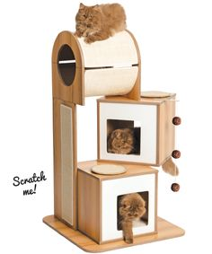 Making sure your cat's scratcher is where she wants it (and not where you want it) could save the life of your couch!