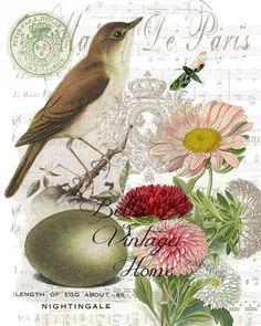 Botanical Nightingale  Bird, Pillow, Note Cards, Tea Towel