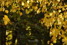 autumn leaves / lichtspiele V by nadine schumacher