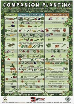 A Companion-Planting System for a Beautiful, Chemical-Free Vegetable Garden