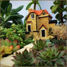 Mini succulent garden by Omini Jardim