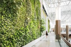 GREEN WALL PEACE : Green over Grey is a Vancouver based design firm that designs and installs living walls also known as green walls or vertical gardens. Their unique soil-free system makes it possible to transform any vertical surface into a lush garden, either inside or out. These walls are not only strikingly beautiful pieces of living art, but also enhances indoor air quality and act as a tonic to ease stress and fatigue.