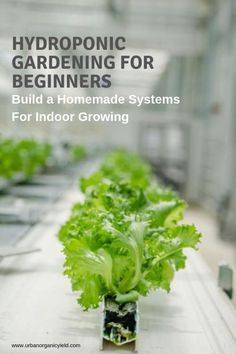 Hydroponic Gardening For Beginners: Build A Homemade System For Bountiful Harvests