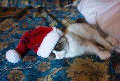 Aww, sleepy grumpy cat. :)