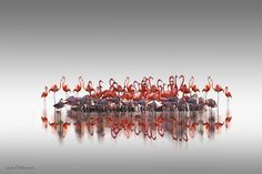 Photo Pink meeting by Andre Villeneuve on 500px