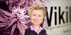 Hillary Clinton's Shocking WikiLeaks Emails About Cannabis