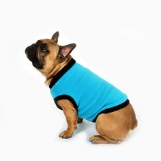 French Bulldog, Turquoise, Dogs, Modern, Clothing, Sweaters, Animals, Outfits, Trendy Tree
