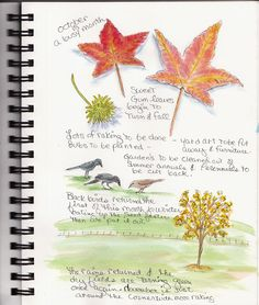 nature journal                                                                                                                                                                                 More