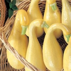 Squash Early Summer Crookneck Organic in The Big Seed Book from Park Seed on shop.CatalogSpree.com, my personal digital mall.