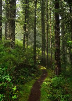 Oregon Coast Hiking Trail #camping #hikinh #backpacking http://www.campingquartermaster.us/